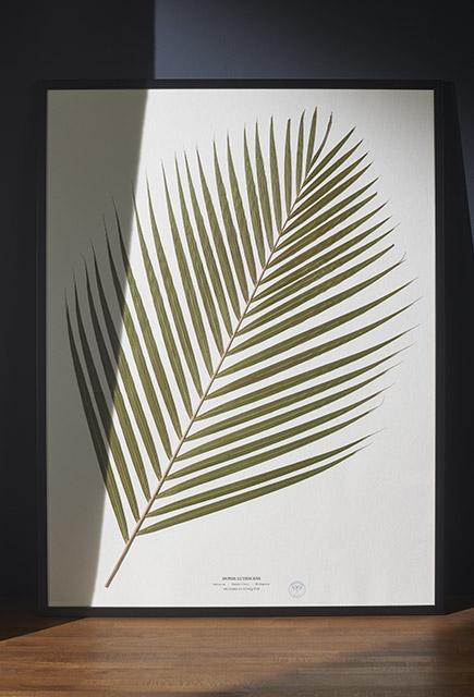 herbarium collections d coration maison shop online nettement chic. Black Bedroom Furniture Sets. Home Design Ideas